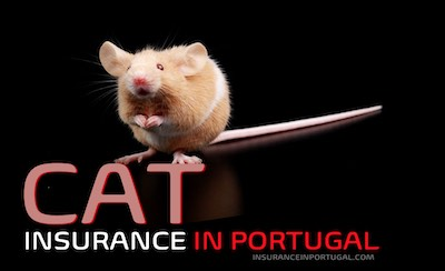 Cat and Kitten insurance and pet insurance in Portugal